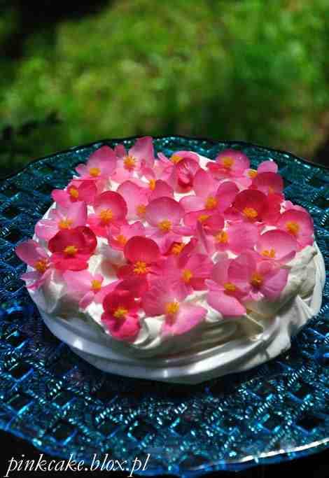 Begonia To Roślina Jadalna. Smakiem Przypominają Trochę Rabarbar. Idealnie Nadaje Się Do Dekoracji Deserów. 1000 Roślin