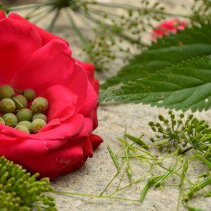 Zbieramy Nasiona Dzikich Roślin I Drzew - Lipy, Dębu, Niecierpka, Babki, Marchwi, Pokrzywy. To Wspaniałe Surowce O Działaniu Leczniczym I Wartości Odżywczej