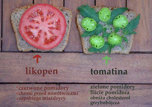 Liście Pomidora Zawierają Tomatinę - Ważne Dla Osób Z Wysokim Poziomem Cholesterolu: W Jej Obecności Cholesterol Nie Wchłania Się Z Przewodu Pokarmowego.