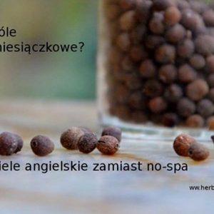 Ziele Angielskie Może Z Powodzeniem Zastąpić Tabletki, Stosowane Przy Napięciu Miesiączkowym, To Zioło Rozluźniające Mięśnie Gładkie. 1000 Roślin Poleca
