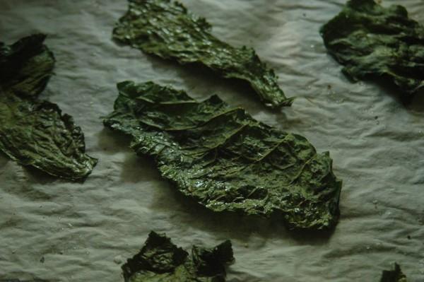 liście chrzanu