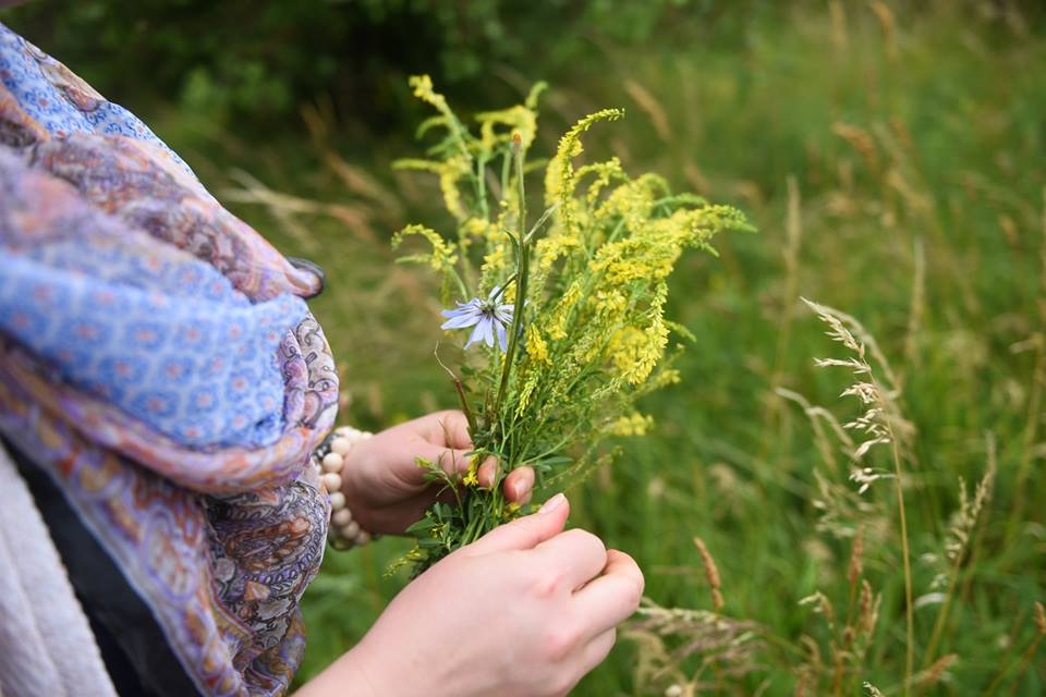 Nostrzyk żółty – Jak Zrobić Olej Nostrzykowy I Jak Stosować (dla Urody)