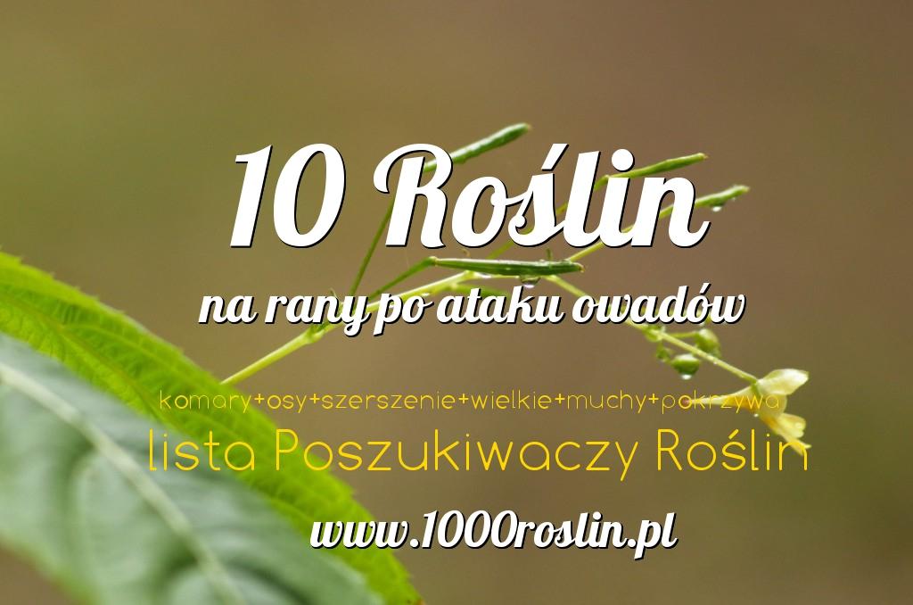 10 Roślin Na Rany Po Ukąszeniu Owadów – Lista Poszukiwaczy Roślin
